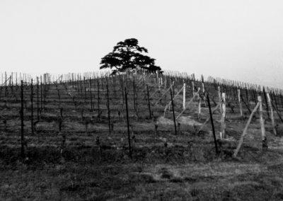 Piemont 3
